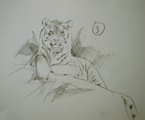 tiger wildlife artist